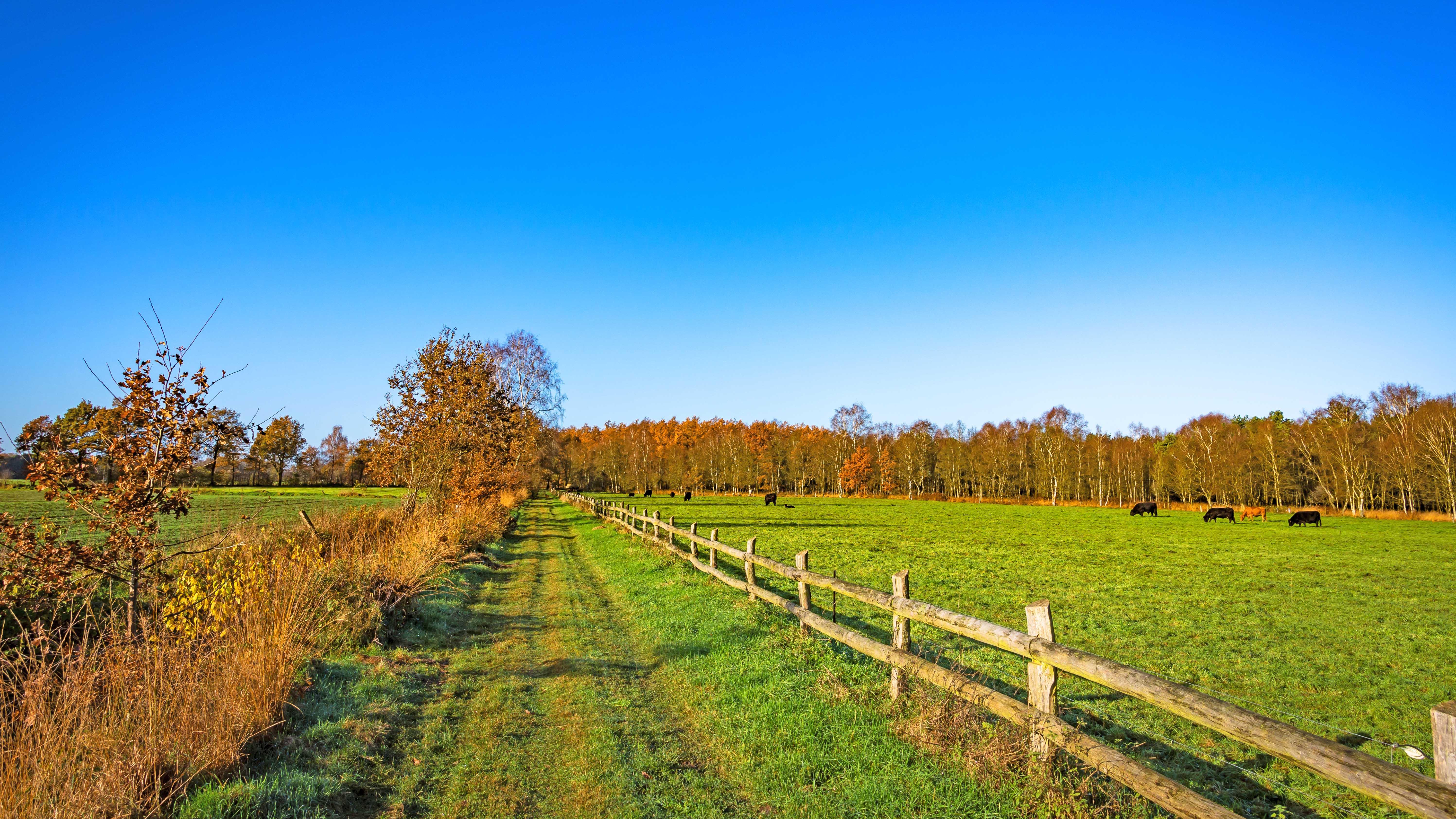 Raus aus dem Moor - auf naturnahen Wegen entlang von Weide und Wiesen