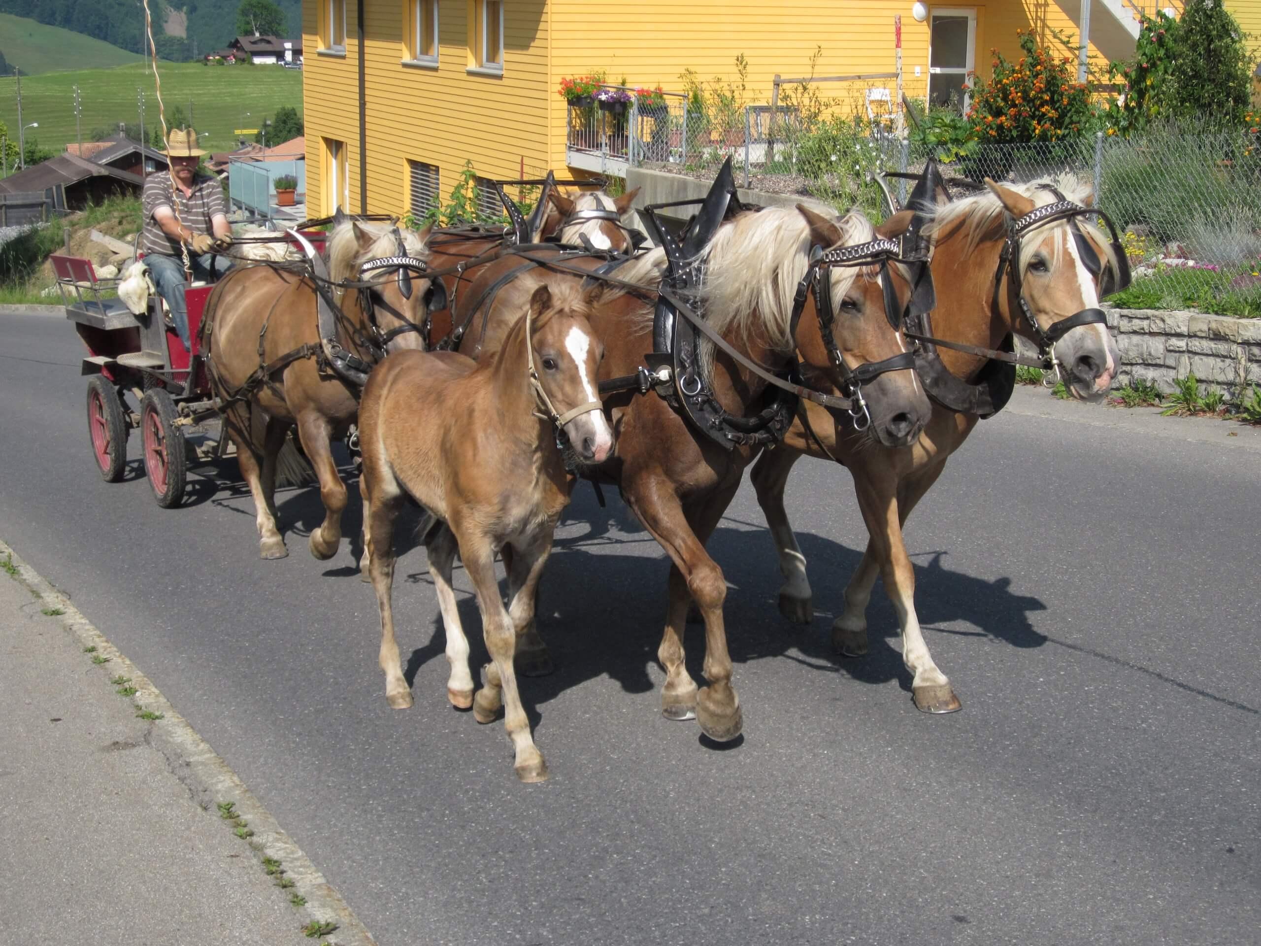 aeschi-kutschenfahrt-pferde-sommer-dorfrundfahrt