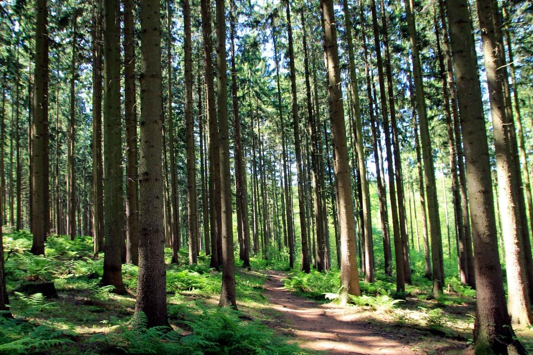 Wilddiebsroute - Waldweg