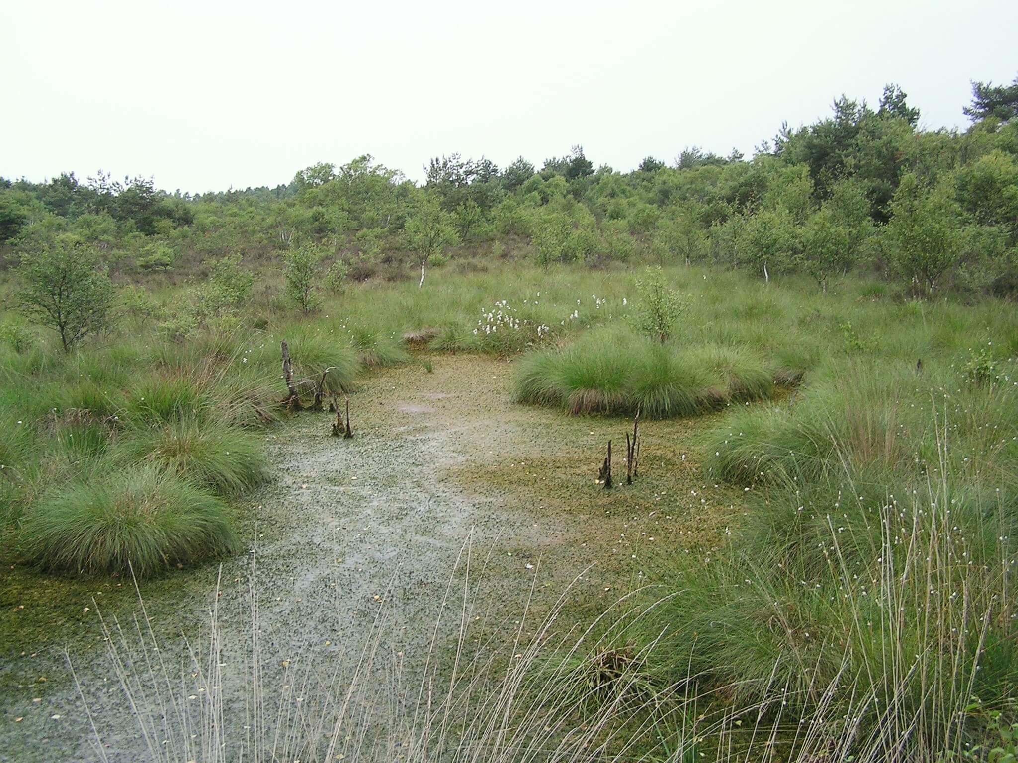 Totes Moor