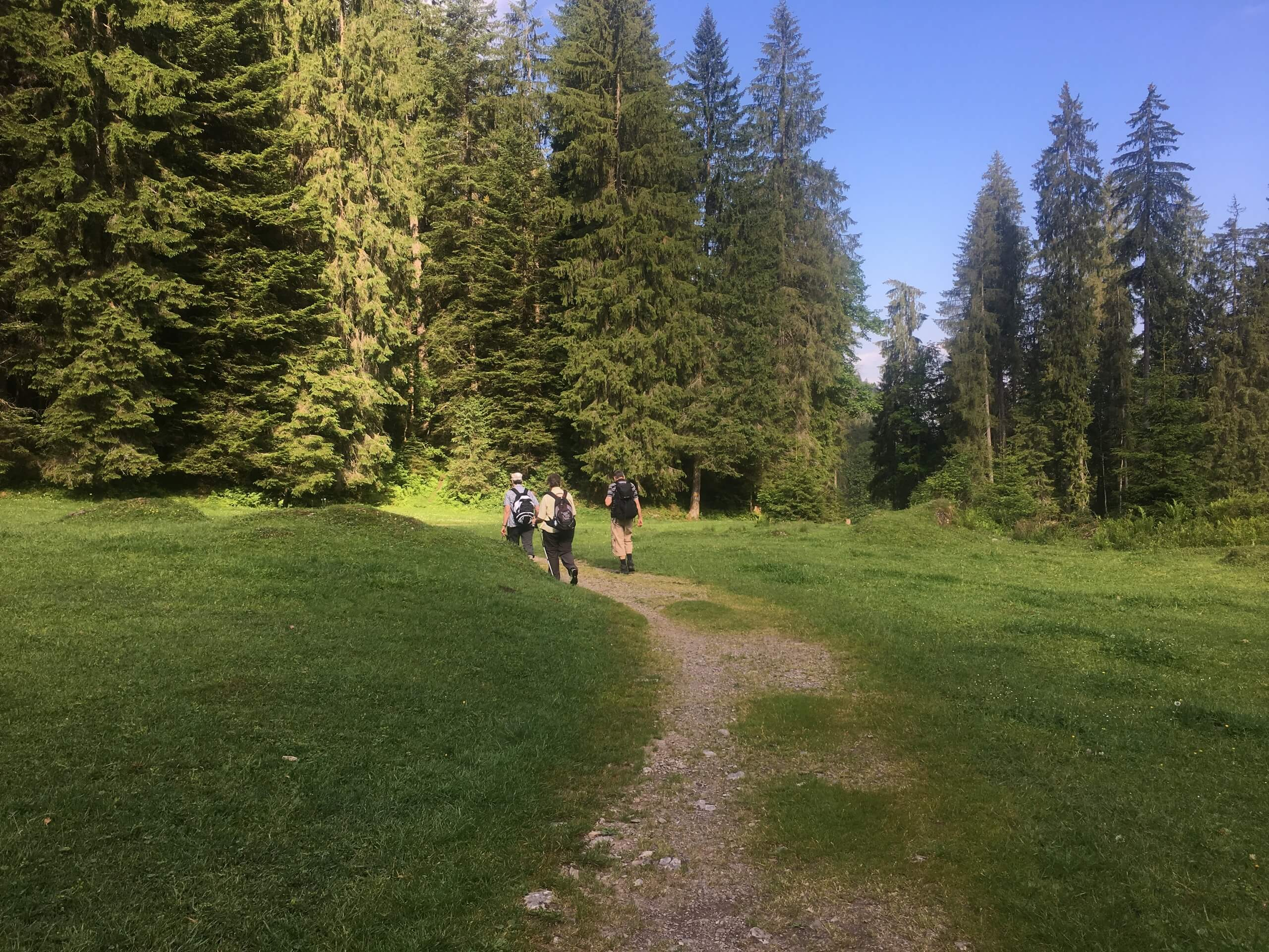 aeschi-suldtal-botanische-exkursionen-sommer-wandern
