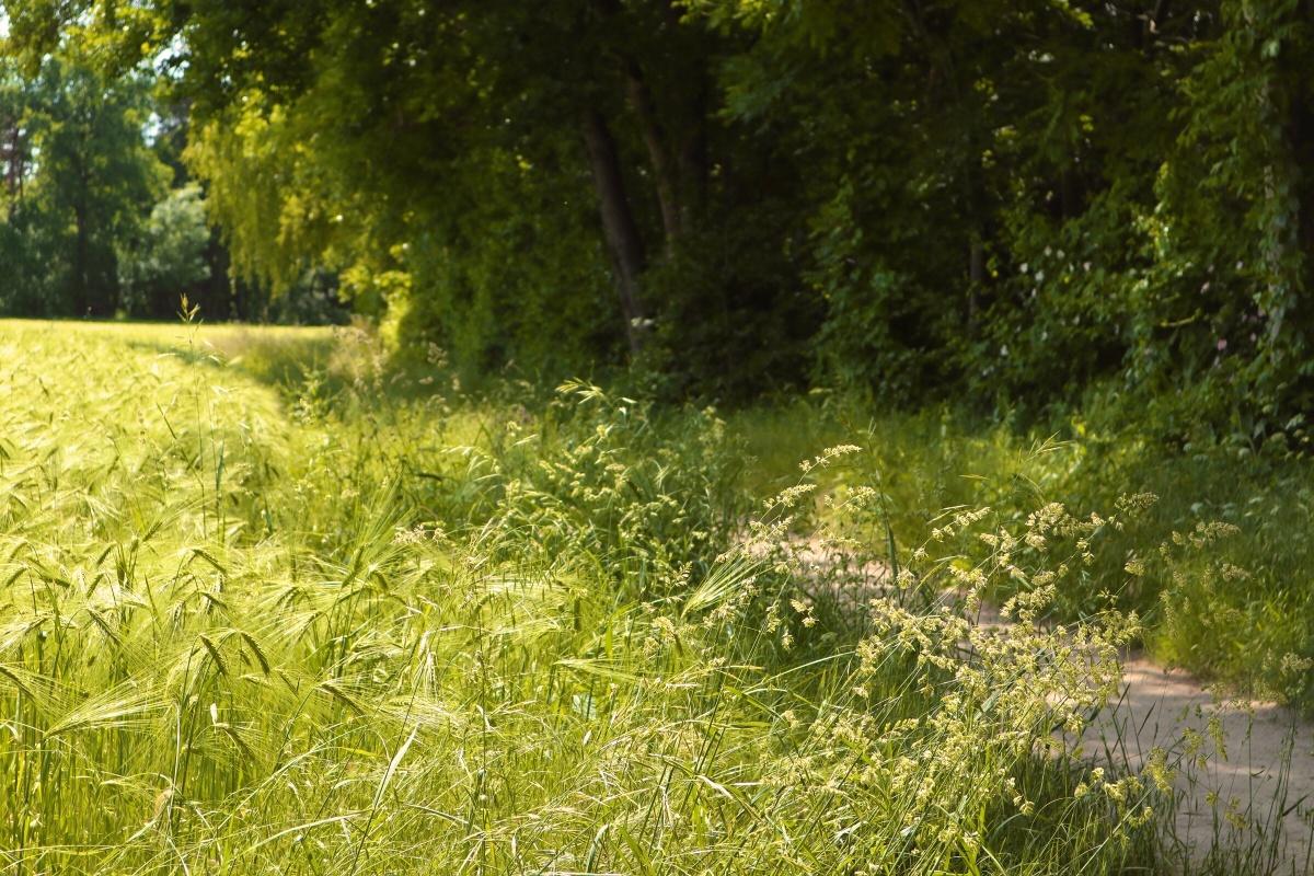 Feld am Wanderweg
