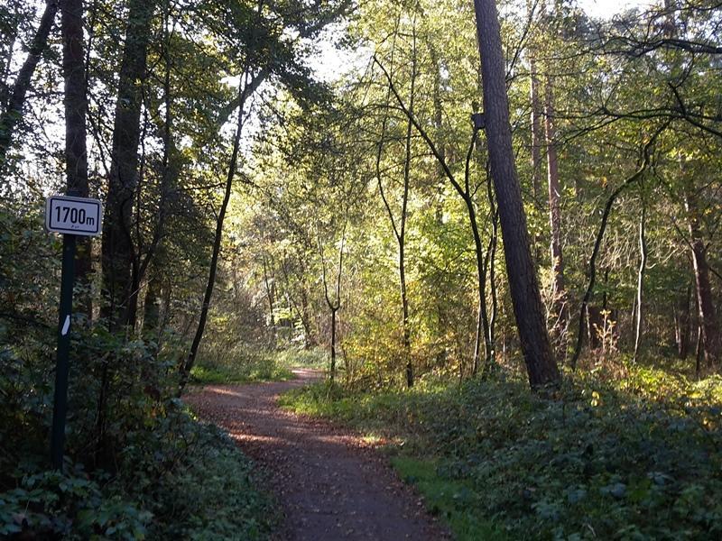 Joggingpfad am Wilhelmsberg