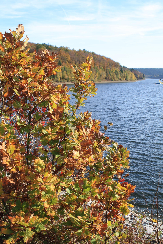 Aabachtalsperre im Herbst Bad Wünnenberg