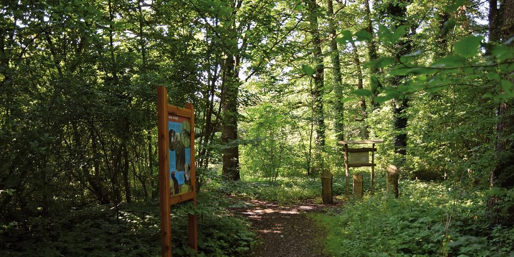 Lehrpfad-Station »Leben im Wald«