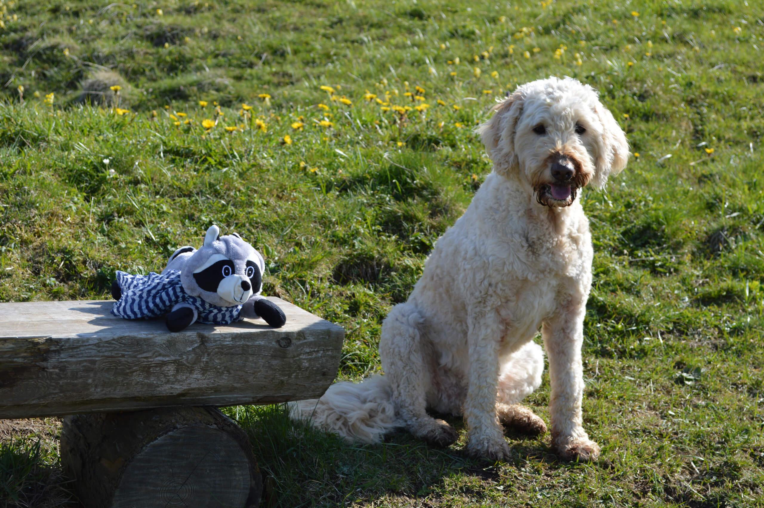 waeschiweg-stofftier-hund-nico-wiese