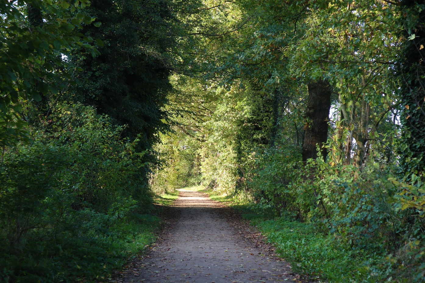 Wanderweg am Verler See