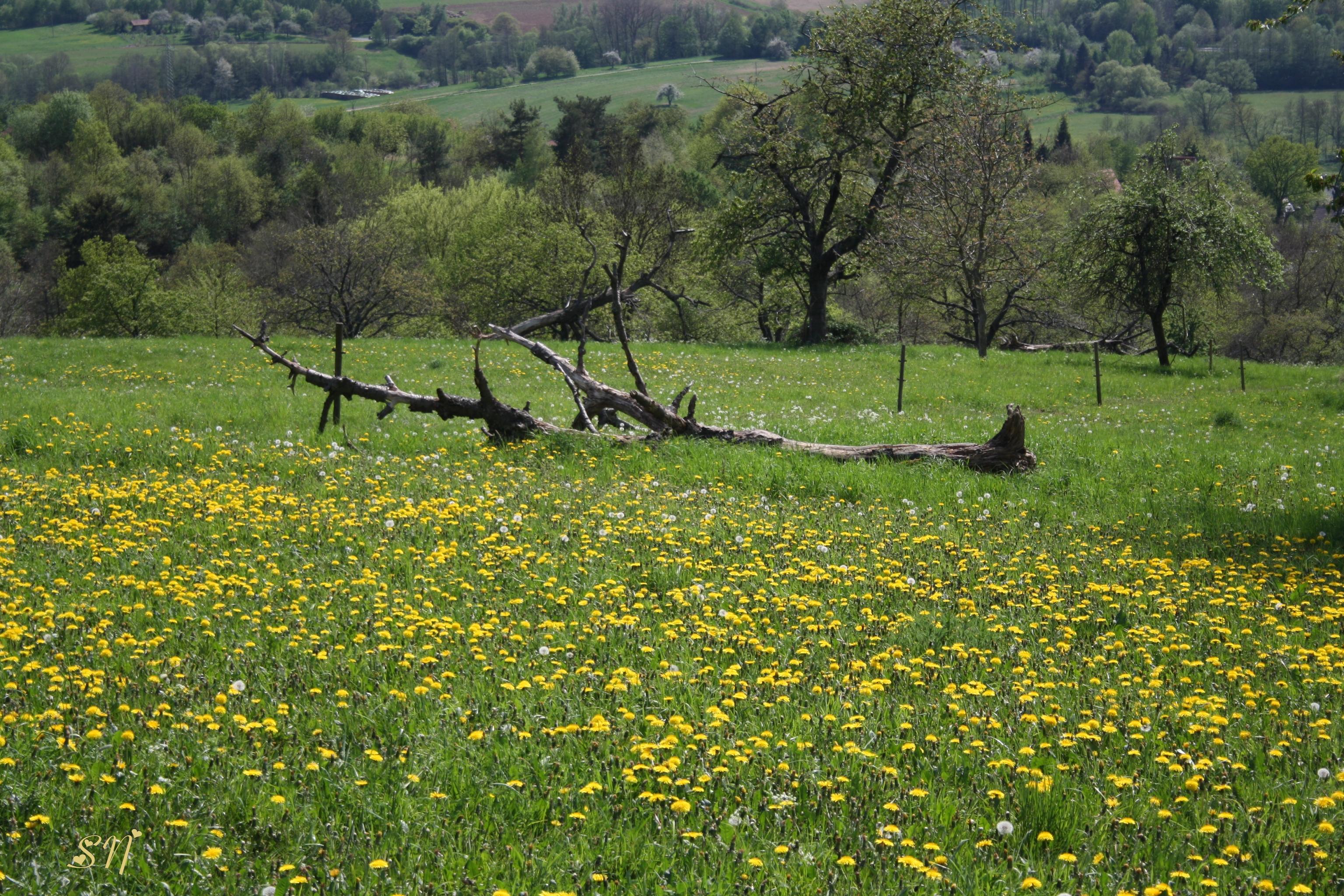Frühling in Mensengesäß Bild:Sandra Nees.jpg