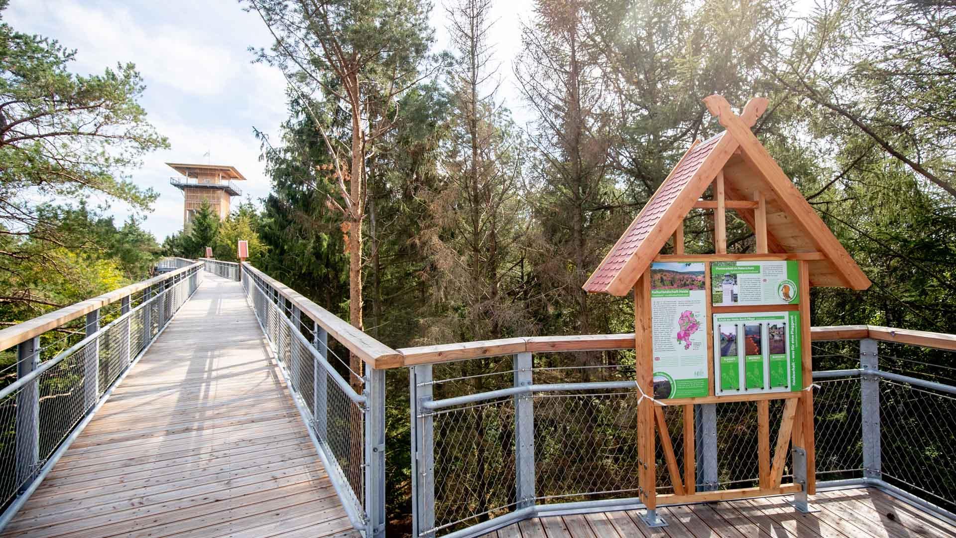 wildpark-luenburger-heide-baumwipfelpfad.jpg